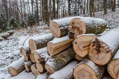 Bois de chauffage frais dans la forêt d'hiver Photographie stock