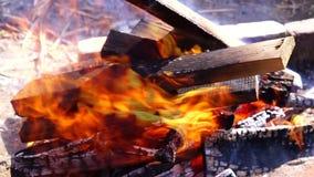 Bois de chauffage, le feu brûlant dans le feu dehors banque de vidéos