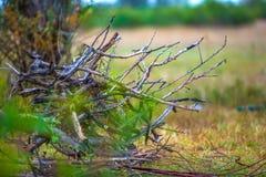 Bois de chauffage pour un feu en nature photo stock