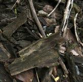 Bois de chauffage sec en bois de ruban photos libres de droits