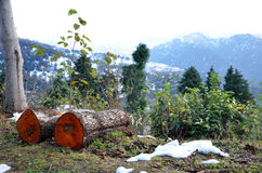 Bois de chauffage sur une pente de montagne Image libre de droits