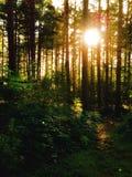 Bois de Chopwell, Gateshead, Angleterre Images stock
