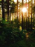 Bois de Chopwell, Gateshead, Angleterre Image stock