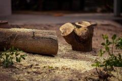 Bois de construction après avoir été coupé par un coupeur d'arbre image stock