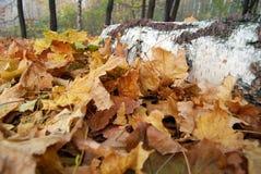 Bois de construction avec des feuilles d'automne Photos stock