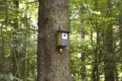 Bois de construction Birdshouse sur un arbre Photographie stock