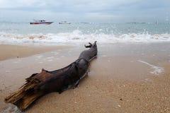 Bois de construction d'arbre d'océan sur la plage Photos stock