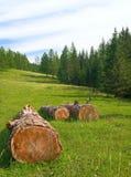 Bois de construction dans le bois Photographie stock