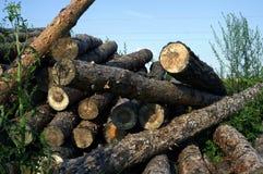 Bois de construction de pin Photographie stock libre de droits