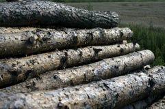 Bois de construction de pin Photo libre de droits