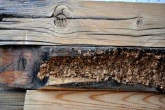 bois de construction endommagé Photographie stock libre de droits