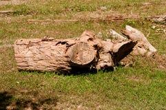 Bois de construction laissé à la putréfaction Photo libre de droits