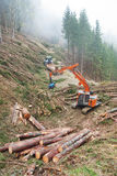 Bois de construction moissonnant en Autriche Photographie stock