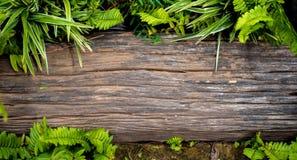 Bois de construction placé au sol avec des feuilles autour de lui Images stock