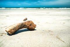 Bois de construction sur la plage gentille Photographie stock libre de droits