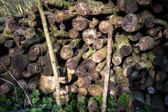 Bois de Coppiced empilé dans le tas de bois Photo stock