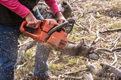 Bois de coupe avec la tronçonneuse Photo libre de droits