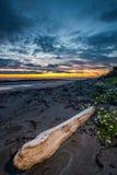 Bois de flottage à la plage Photographie stock libre de droits