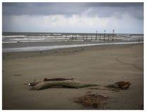 Bois de flottage à la plage Images libres de droits