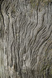 Bois de flottage avec la texture superficielle par les agents Photographie stock