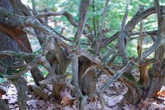 Bois de flottage couvert dans la mousse dans les bois Photos libres de droits