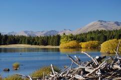 Bois de flottage dans l'automne Photo libre de droits