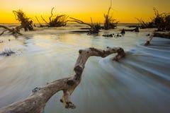 Bois de flottage dans l'océan, exposition de temps Photographie stock libre de droits