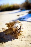 Bois de flottage de désert pendant l'hiver Photographie stock libre de droits