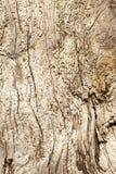 Bois de flottage - fond d'une fin détaillée d'un noeud âgé d'arbre avec une texture définie Images stock