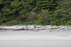 Bois de flottage l'explorant de famille sur la plage images libres de droits
