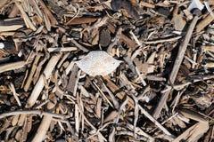 Bois de bois de flottage ou de dérive et une coquille morte de crabe empilée sur une plage photographie stock