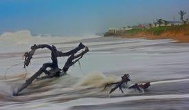 Bois de flottage sur la plage Photographie stock libre de droits