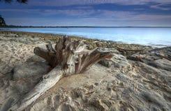 Bois de flottage sur la plage Photos stock