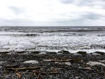Bois de flottage sur la plage après ouragan photos libres de droits