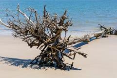 Bois de flottage sur une plage de la Floride Photos stock