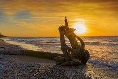 Bois de flottage sur une plage du lac Huron au coucher du soleil Photos stock