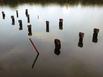 Bois de flottement sur l'océan Photo libre de droits