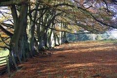 Bois de hêtre d'automne Photographie stock libre de droits
