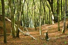 Bois de hêtre, parc national d'Eifel, Allemagne Images libres de droits