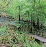 Bois 5 de jacinthe des bois Photo libre de droits