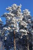 Bois de l'hiver Photos libres de droits