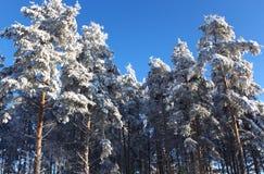 Bois de l'hiver Photo stock