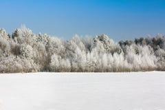 Bois de l'hiver Photographie stock libre de droits