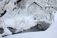 Bois de l'hiver de neige Images libres de droits