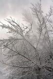 Bois de l'hiver de neige Photos libres de droits