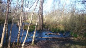 Bois de lac de tir de nature Images stock