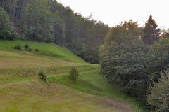 Bois de montagne de la Slovénie image stock