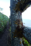 Bois de mousse Image libre de droits