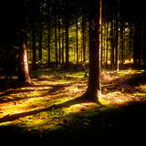 Bois de mystère Images stock