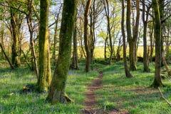 Bois de Pendarve Photo stock